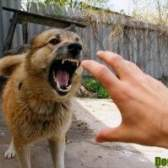 Сказ у собак - симптоми, поведінку