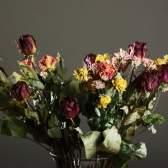 Як засушити квіти?