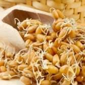 Пророщена пшениця: процес приготування і користь для здоров`я