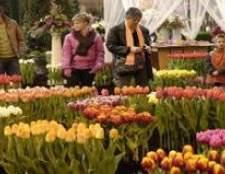Голландський фестиваль квітів