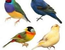 До чого сняться птиці