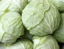 Як квасити капусту. Рецепт приготування в домашніх умовах