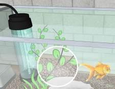 Як змінити воду в акваріумі