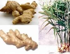 Як виростити корінь імбиру в домашніх умовах?