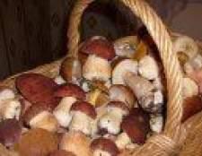 Про грибах і їх користь