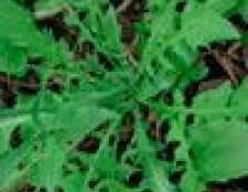 Овочеве рагу з зеленню грициків
