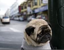Ознаки епілепсії у собак