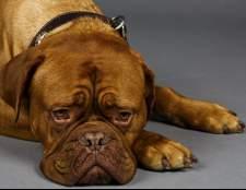 Рак яєчок у собак