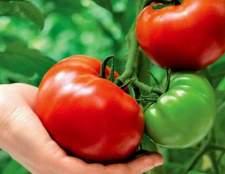 Сорт томата: товстий карлсон f1