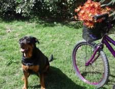 Велосипедна прогулянка з собакою - чи не важко?