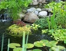 Водні рослини для ставка